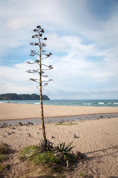 Hot Water Beach Coromandel Nouvelle Zélande