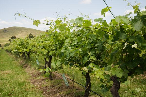 Barossa Valley vins de Adelaide