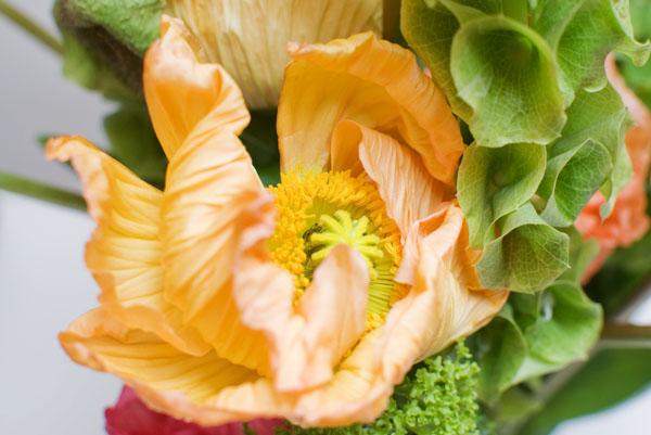 La fleur de pavot orangée