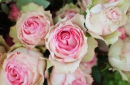Roses en fleur