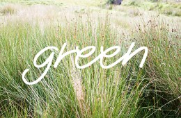 TOP 10 astuces green
