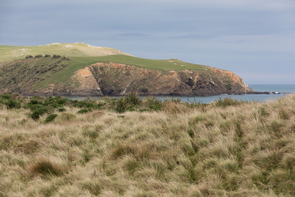 Curio Bay Catlins NZ