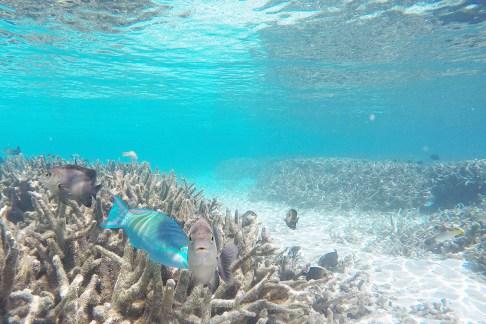 Snorkling Maldives