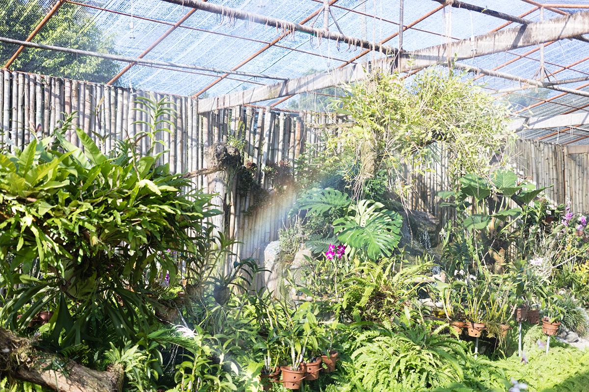 Jardin des Orchidées à Kurumba Maldives