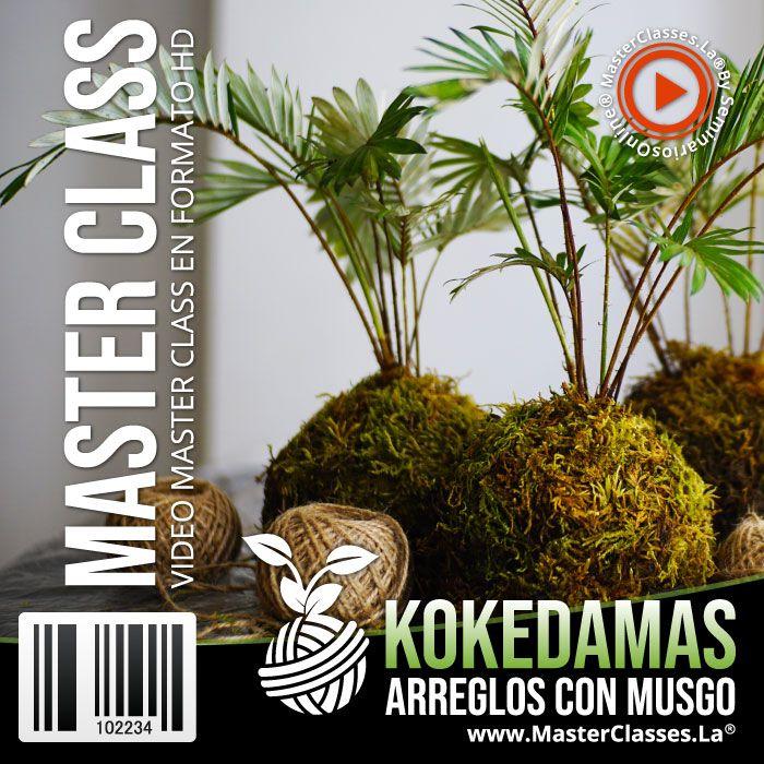 Kokedamas arreglos con musgo by reverso academy cursos online clases