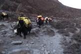 caravane de dzo, en route pour la basse vallée