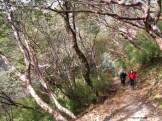 Rhdodendrons de la zone tempérée haute