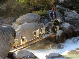 Népal, Rolwaling, Simigaon