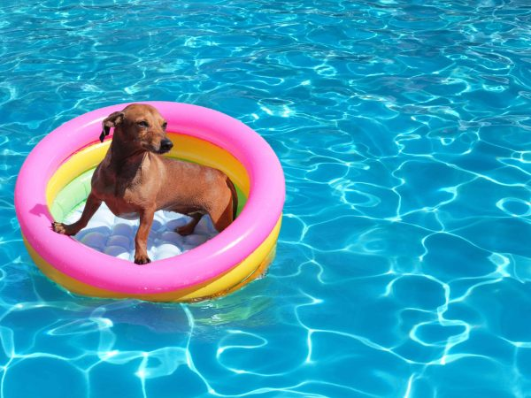 piscina-per-cani-principale-xcyp1