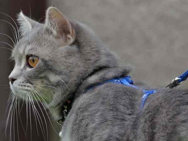 pettorina-gatto-principale-xcyp1