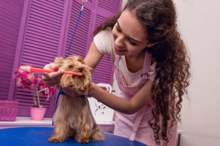 Donna che spazzola i denti al cane