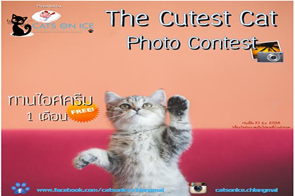 Cats On Ice Café เชิญชวนคนรักแมวร่วมส่งภาพถ่ายสุดชิคกับน้องเหมียวเพื่อลุ้นของรางวัล