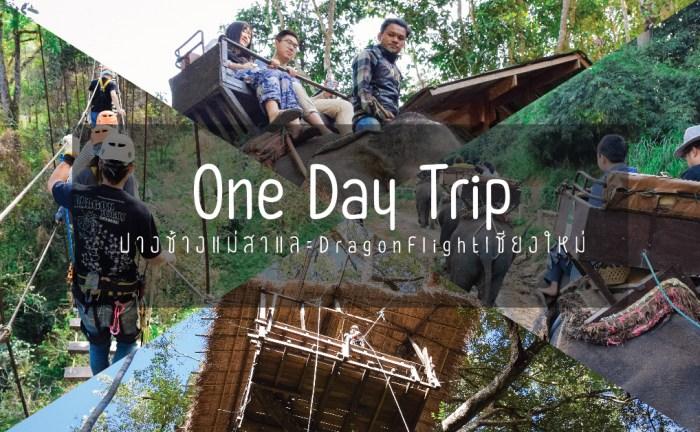 One Day Trip 2,300บ.ปางช้างแม่สาและ Dragon Flight เชียงใหม่