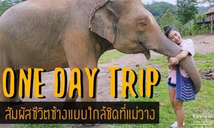 ONE DAY TRIP ประสบการณ์เลี้ยงช้างแบบใกล้ชิดที่แม่วาง