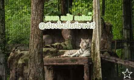 Chiang Mai Night Safari รีวิวเชียงใหม่
