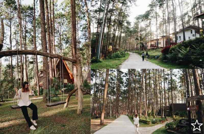 สวนป่าดอยบ่อหลวง