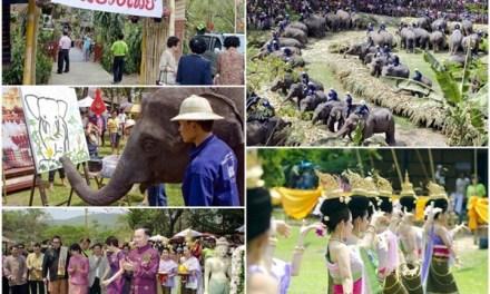 เชิญเที่ยวงานวันช้างไทย ครั้งที่ 14 ประจำปี พ.ศ. 2556