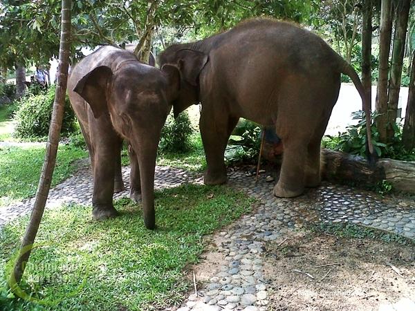 ไปดูช้างกันดีไหม มาให้ไว ที่ศูนย์อนุรักษ์ช้างไทย ลำปาง