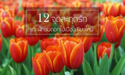 12 จุดสะดุดรัก แวะพักชมดอกไม้เมืองเชียงใหม่