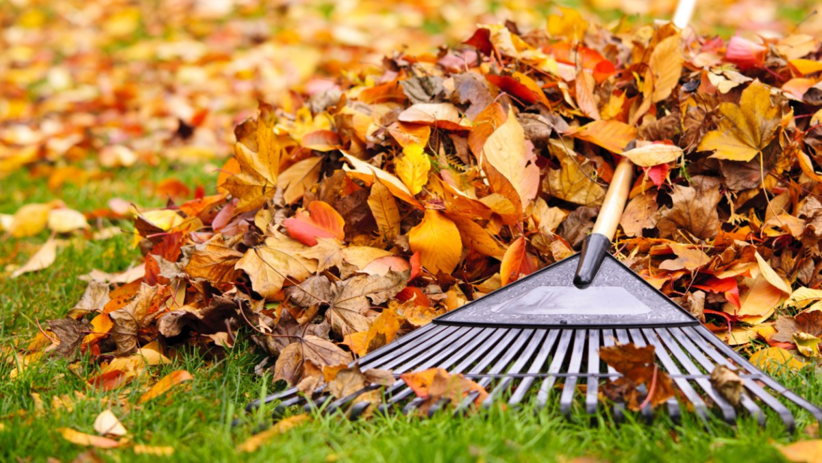Burn Calories Raking Leaves