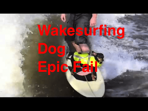 Wake Surfing Dog – Epic Fail – Funny Chihuahua on Surf board