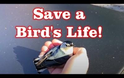 What do you do if Bird Flys into Window