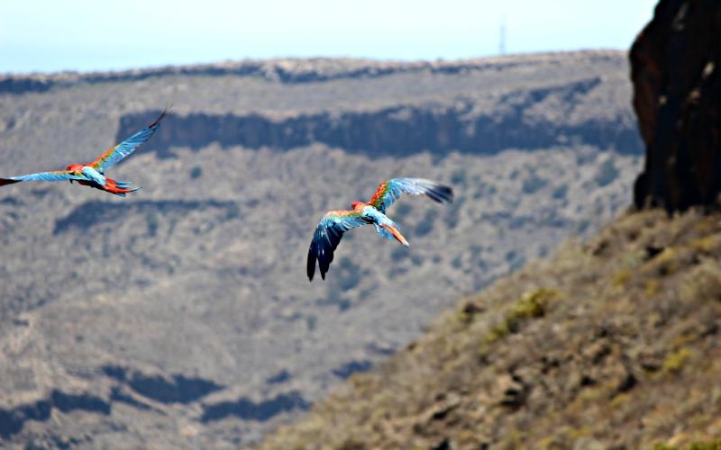 Gran Canaria - Palmitos Park - Exotic Bird Show