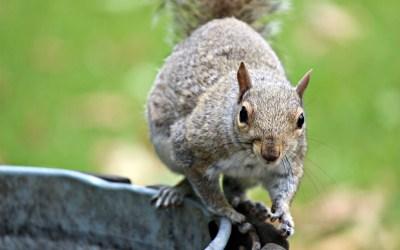 Cuteness-overload | Eekhoorns in Hyde Park
