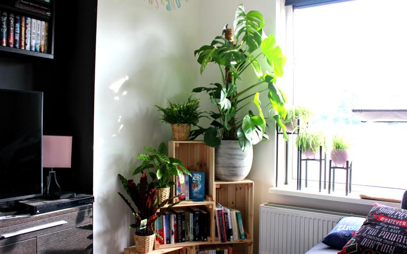 Plantenhoek