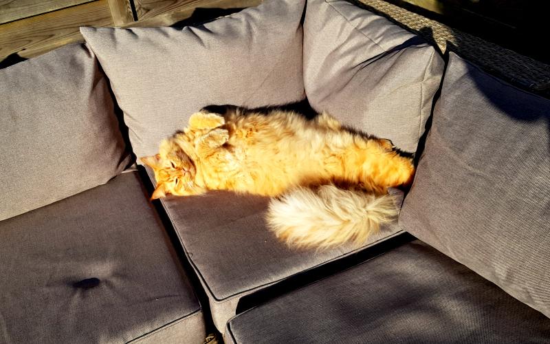 Fred op loungebank