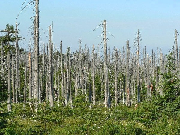 The effects of Acid Rain on a forest in the Czech Republic. Image via TheWaterWatch