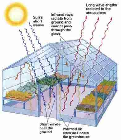 How a greenhouse works. Image via Hydroponics.