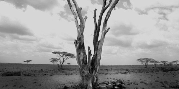 Desertification in the arid parts of Kenya. image credit Rascona-of-the-week.