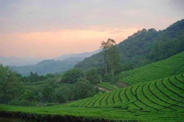 Katiyo tea estate, farming is a primary level activity. Image credit. birdingzimbabwe.com