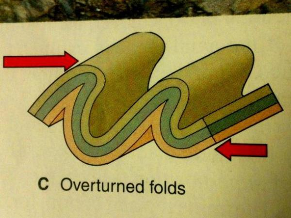 An overfold. Image by StudyBlue.