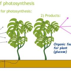 Diagram With Inputs And Outputs Of Photosynthesis Process 110v Wiring Factors Free Zimsec Revision Image Credit Slideshare Net