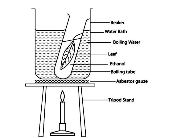 The test for starch experiment