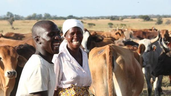 Cattle are still a symbol of wealth even today. Image credit nehandaradio.com