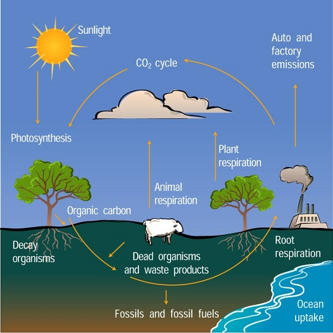 The carbon cycle. Image credit windows2universe.org