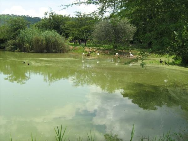 Eutrophication at Lake Chivero. Image credit palmaison.com