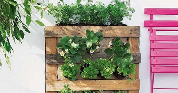 How Build Vertical Garden