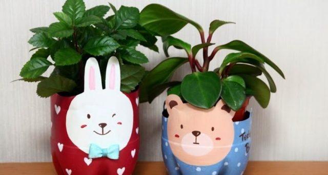 cachepô para plantas