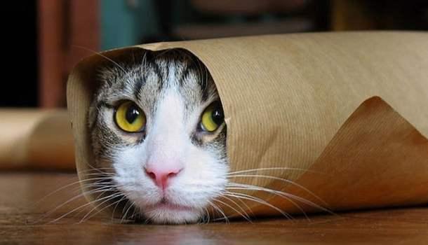Gatos viciam. E a vida é muito curta para ter um gato só
