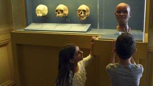 Wikipédia lidera criação de acervo digital do Museu Nacional com milhões de imagens
