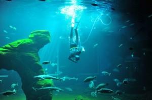 DOS. Nadando con tiburones