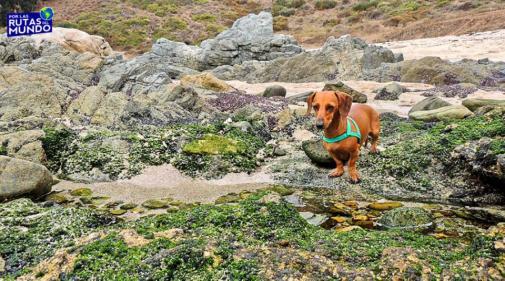 Tips para viajar con perros