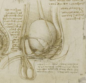 Estudos de anatomia do sistema reprodutivo da mulher (esquerda), do homem (centro) e do coito (direita) elaborados por volta de 1510-1512