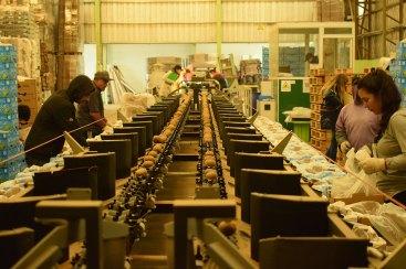 kiwi-produccion-batan-internos-5