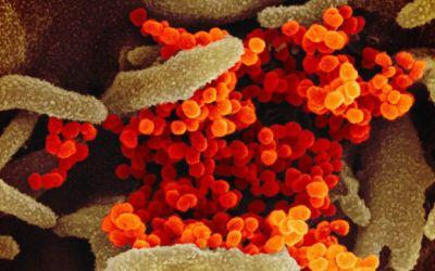 De virus y crecepelos