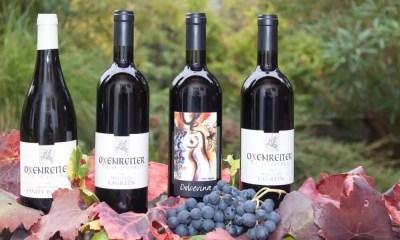 Como entender os rótulos de vinhos e nunca mais ficar confuso